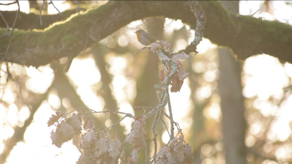 film-oiseau-belle-lumière-chloé-mazoyer